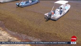 FOTO: Realizan acciones para contener sargazo en Quintana Roo, 15 Junio 2019