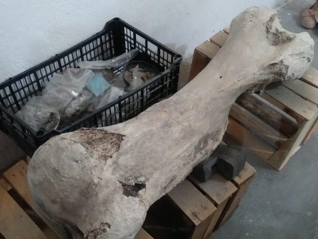 foto restos mamut puebla 9 junio 2019