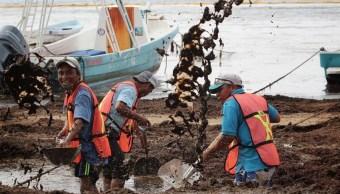 Foto: limpieza de sargazo en playas mexicanas, 28 de junio 2019. EFE
