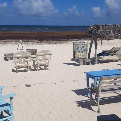 Sargazo, catástrofe ambiental que se aproxima en la Riviera Maya