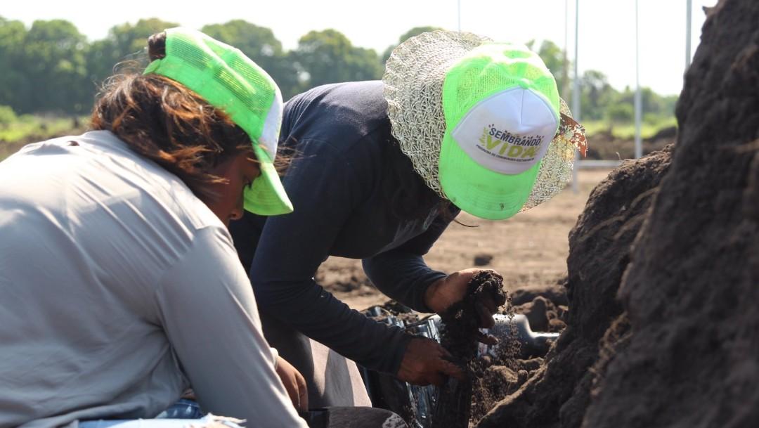 FOTO Ante la ONU, el canciller de México, Marcelo Ebrard, expone el Plan de Desarrollo Integral para Centroamérica; 'Sembrando Vida' es la primera etapa (Twitter @SemVidaMx 2019)