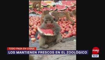 Todo Pasa En China: Los mantienen frescos en el zoológico
