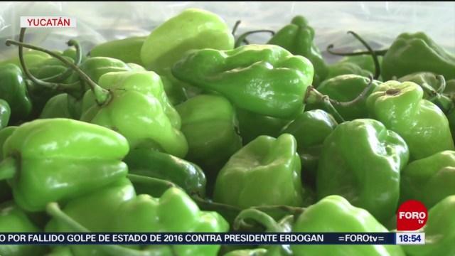 Foto: Yucatán crea centro de protección del chile habanero