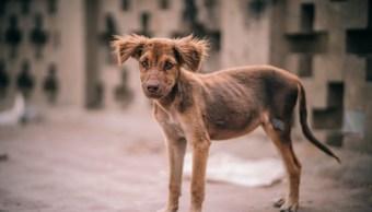 Ma-Toi es el nombre del perrito quemado con asfalto hirviendo. (Pexels.com)