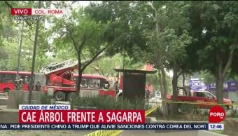 Árbol cae frente a sede de Sagarpa, en Avenida Insurgentes, CDMX