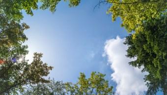 Plantar árboles es la solución contra el cambio climático