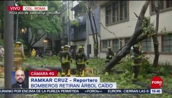 Foto: Bomberos Árbol Caído Colonia Juárez 8 Julio 2019