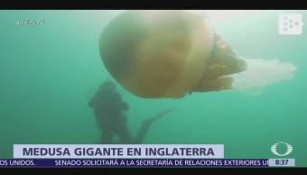 Captan en video a medusa del tamaño de una persona