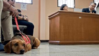 Campeón es el primer perrito en asistir a una corte latinoamericana tras ser víctima de maltrato animal (Ezequiel Becerra/AFP)