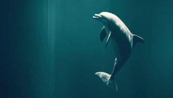 Los delfines regulan cada latido de su corazón mientras bucean: Estudio