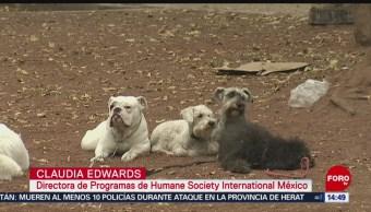 Foto: El trato influye en la conducta de los animales