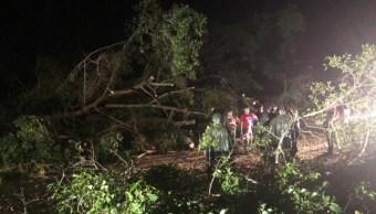 Caída de árboles por lluvia en Colima.