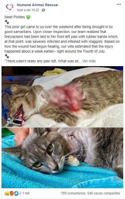 Captura de pantalla. Facebook/Humane Animal Rescue