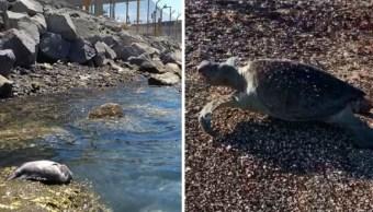 Animales marinos muertos en Sonora (Captura de pantalla)