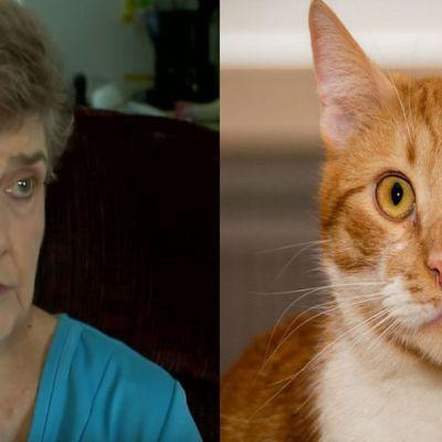 Señora de 79 años irá a prisión por alimentar a gatos callejeros