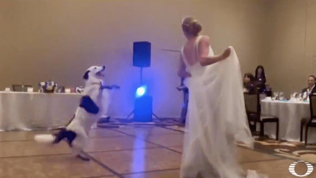 Foto En plena boda, novia baila coreografía con su perro 1 julio 2019