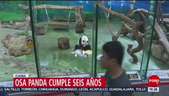 FOTO: Osa panda cumple seis años en China, 7 Julio 2019