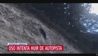 FOTO: Oso intenta huir de autopista en Estados Unidos y se lastima, 28 Julio 2019
