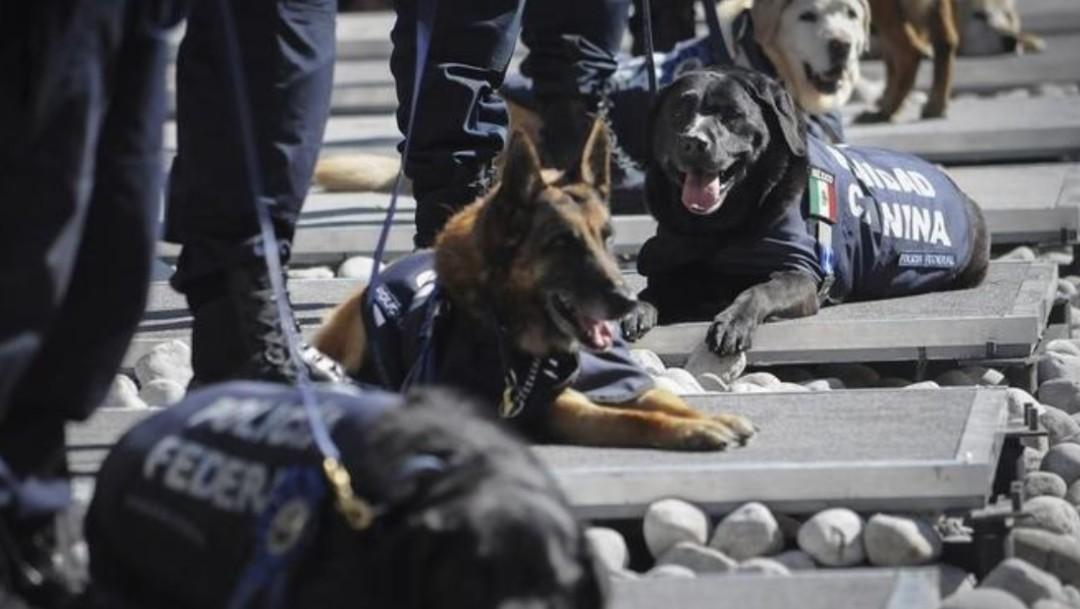 Foto: Policía Federal jubila a 28 oficiales caninos y será adoptados por familias mexicanas para darles una vejez en descanso, julio 13 de 2019 (Imagen: El Siglo de Durango)