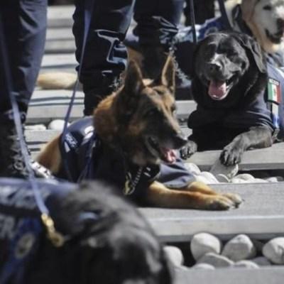 Jubilan a 28 perros de la Policía Federal; serán puestos en adopción