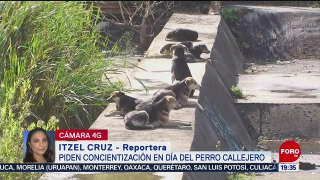 FOTO: Piden concientización en el Día del Perro Callejero, 27 Julio 2019