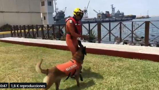 Foto: Odile tenía aproximadamente dos meses de vida, cuando llegó a la Estación Naval de Búsqueda, Rescate y Vigilancia Marítima, 21 de julio de 2019 (Twitter @Semar_Mx)