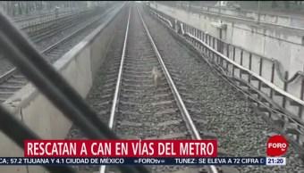 Foto: Rescatan Perro Vías Metro CDMX 12 Julio 2019