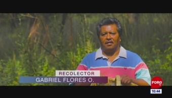 Retratos de México: Recolector de hongos
