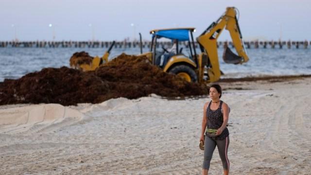 Foto: Recolectan sargazo en Playa del Carmen, Quintana Roo, 8 de mayo de 2019, México