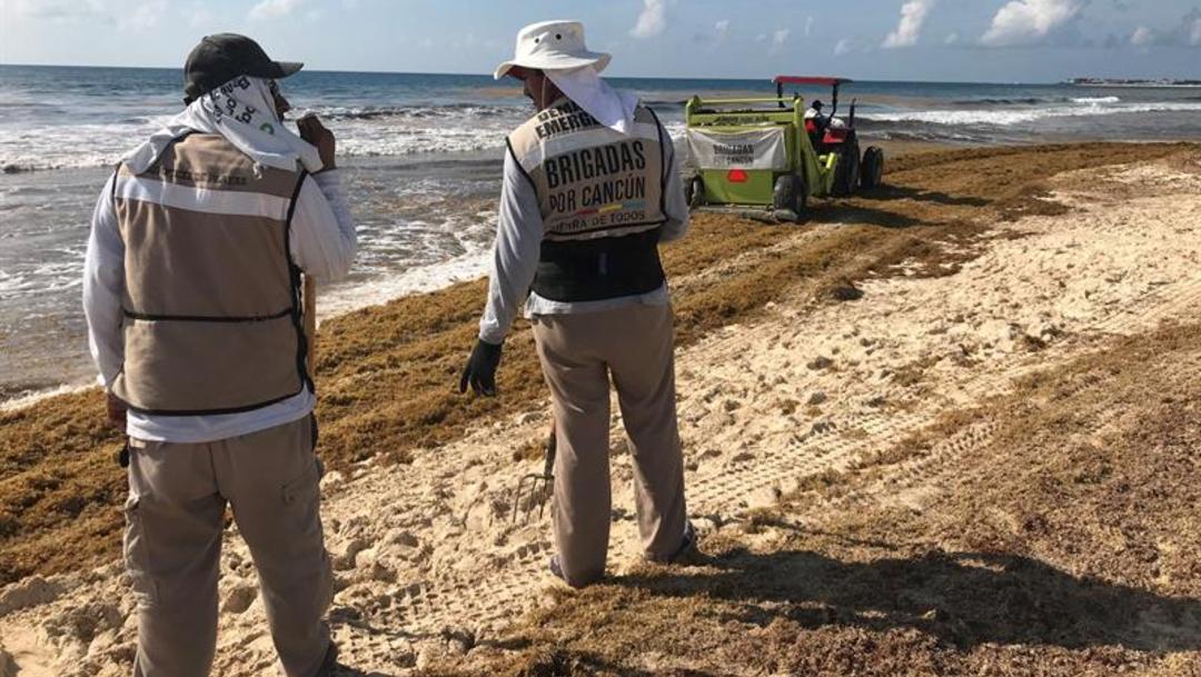 Imagen: Semar informó que en entre mayo y la primera quincena de julio se recolectaron 38 mil 892 toneladas de sargazo, 24 de julio de 2019 (efe, archivo)