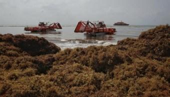 Foto: sargazo afecta a las costas de Quintana Roo, 1 de julio 2019. EFE