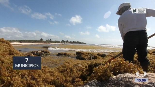 Foto: Se han retirado más de 40 mil toneladas de sargazo en playas de Cancún