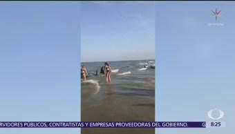 Turistas salvan ballenas varadas en Georgia