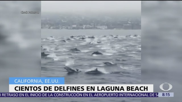 Video capta a cientos de delfines en Laguna Beach, California