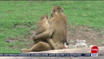 FOTO: Zoológico de Guadalajara tiene nuevos habitantes, 13 Julio 2019