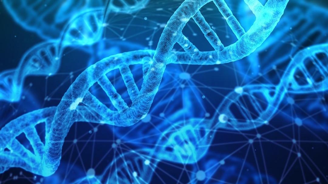 Gen-Gay-Genetica-Orientacion-sexual-Homosexualidad