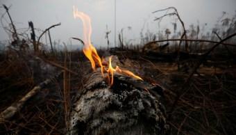 Destrucción amazónica puede derivar en boicot a sector agropecuario brasileño