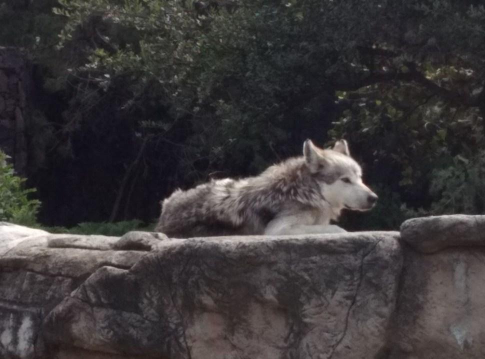 Recortan presupuesto a zoológicos en la CDMX; animales se ven afectados