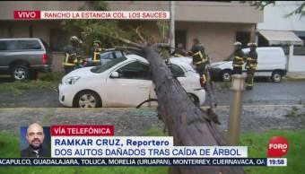 FOTO: Árbol cae sobre dos coches en la alcaldía Coyoacán, 18 Agosto 2019