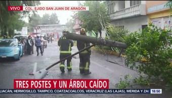 Foto: Caída Árbol Arrasa Con Tres Postes Luz GAM CDMX