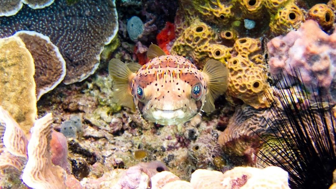 Quintana Roo: Arranca siembra masiva de coral para rescatar el Sistema Arrecifal Mesoamericano
