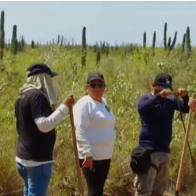 Hay cuatro mil personas desaparecidas en Sinaloa