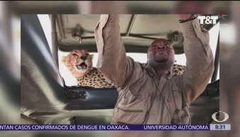 Guía de turistas se toma selfie con felino salvaje