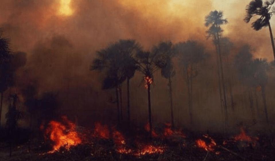 Resultado de imagen para incendios amazonia brasil