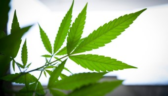 SCJ ordena garantizar terapia con cannabis a niño con epilepsia