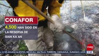 FOTO: Más de mil 300 hectáreas afectadas por incendio de Sian Ka'an en Quintana Roo, 25 Agosto 2019