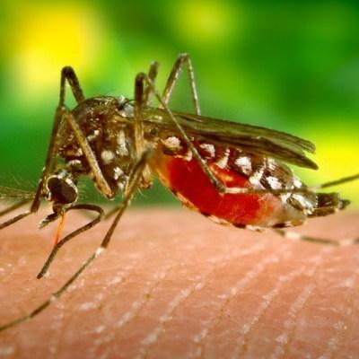 El alcohol y la ropa negra, razones por las que te pican los mosquitos