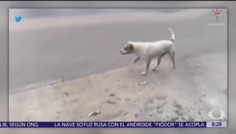Perro recoge basura en calles de Monterrey, bajo la lluvia