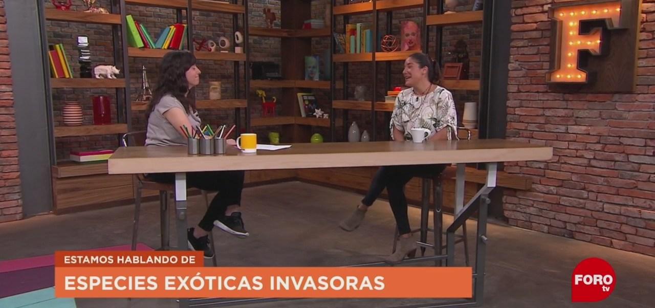 FOTO: ¿Qué son las especies invasoras?, 31 Agosto 2019