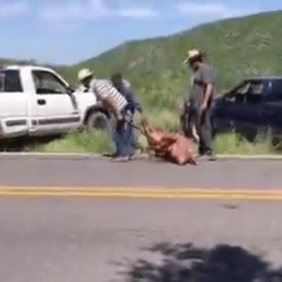Video: Vuelca trailer que llevaba cerditos; pobladores roban animales